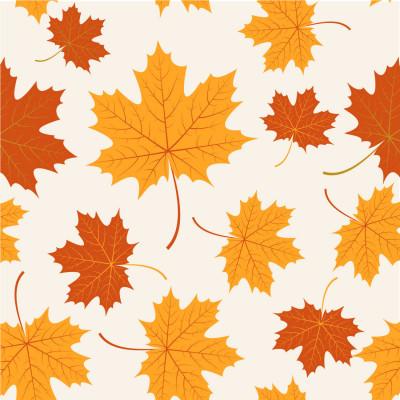 Papel de Parede Folhas Outono Canadá